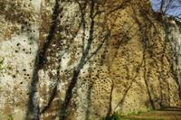 三浦半島の森へ14 - はーとらんど写真感
