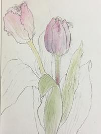 チューリップと春の歌。 - 『一日一畫』 日本画家池上紘子