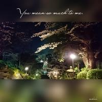 「池上本門寺の夜桜」2017.4.7 - わたしの写真箱 ..:*:・'°☆