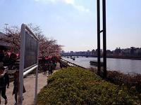 2017.4.3 桜が三分咲き - 下町NAOちゃんのマリンライフ