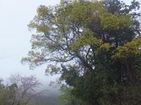 雨と霧の中 - アオモジノキモチ