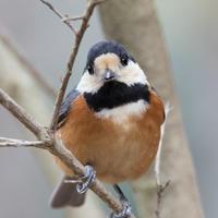 逃げない野鳥たち - うちのまわりの自然新聞