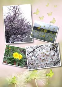 春の花道♫ - *はんどめいどクラスy*