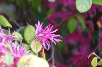 庭は急に春らしく - 玉家の生存報告