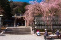 大石神社の桜 - ぽとすのくずかご