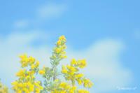 青空が見たい! - *PHOTOMOMIN*