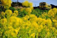 菜の花築堤をゆく、いすみ350形単行気動車 いすみ鉄道 - My B Side Life season2