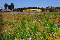 春待つ、田園風景にいすみ350形+いすみ300形 いすみ鉄道 - My B Side Life season2