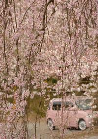 桜・・・と - こんな日は空を見上げてⅡ