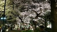 国立市の夜桜 - Cooper's Chronicle