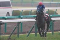 第60回 サンケイスポーツ杯阪神牝馬ステークス - 黄金の旅路