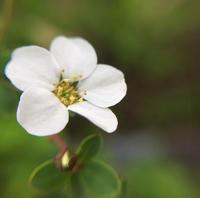 1センチにも満たない小さなお花の世界 - 編み好き@amiami通信