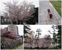 花見散歩♪ - りりぃ達といっしょ+りお