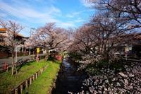 川越 氷川神社(新河岸川) - belakangan ini