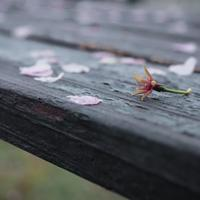 【暢】雨の土曜日。 - いつかきっと