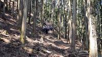 ヤマユラ … イワウチワ群生地を歩きました - ヒデさんの山遊び