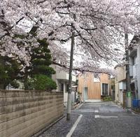 桜の先に見える木張りの家、入り窓からみえる桜 - kukka kukka