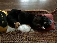 串猫団子 - りきの毎日