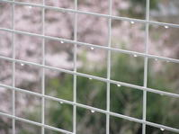 雨の花ごもり(Ermitage dans Fleurs, sous la Pluie) - ももさえずり*紀行編*cent chants de chouette