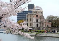 平和公園の桜 - できる限り心をこめて・・Ⅲ