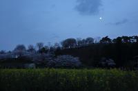 今宵桜月夜 - 風の彩り-2