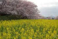 福貴畑・天理・・・最後は醍醐池 4/4 - ぶらり記録(写真) 奈良・大阪・・・