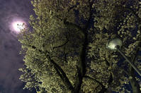 夜桜 - akiy's  photo