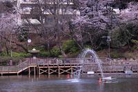 桜巡り③ 見次公園~南蔵院 - 子猫の迷い道Ⅱ