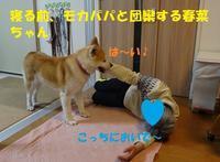 怖いオバサン・・・(^^;) - もももの部屋(家族を待っている保護犬たちと我家の愛犬のブログです)