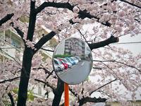 幸雨 - 1/365 - WEBにしきんBlog
