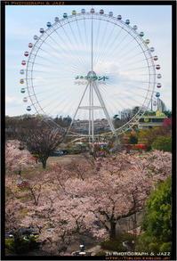 よみうりランドの桜 with Speedmaster 50mm F0.95 - TI Photograph & Jazz