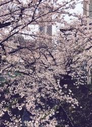 4月10日(月)の営業時間は12:00~16:00です。ミトラカルナさんの焼菓子、入荷しています♪ - miso汁香房(ロジの木)