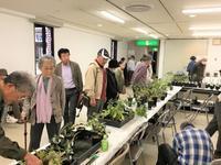 広島~西日本錦草会 山野草展示会の様子 全く・・・ - 園芸のいのうえ屋