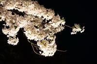 土曜の夜に - むーちゃんパパのブログ 3