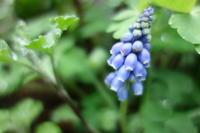 春の雨、お庭の様子 - 美鈴とトラと私とお庭