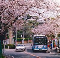 鎌倉山さくら道を歩く - 黄色い電車に乗せて…