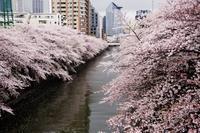 Snap No175 - 東京Shy 写歩く