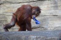 リキくんの布遊び、百面相 - 今日ものんびり動物園