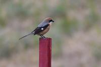 運河の鳥たち - Taro's Photo