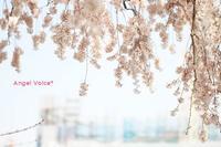 変わりゆく風景 - Angel Voice*