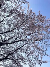 4月16日はフランスフェア in 横浜ベイクォーター! - 少し上質な毎日