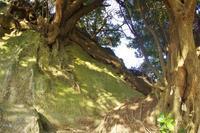 三浦半島の森へ15 - はーとらんど写真感