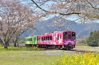 花の錦川鉄道 - 団塊鉄ちゃん気紛れ撮影記
