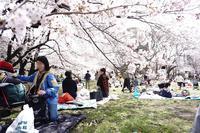 桜色の風が吹いて - 木洩れ日のなかで
