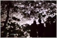 SANKEIEN / 三渓園 Ⅳ - 花鳥風猫ワン