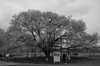 Leica M Monochrom+Carl Zeiss Distagon T* 1.4/35 ZM - Dr.Margaridaの備忘録