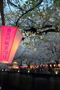 目黒川夜桜 - 片眼を閉じて見る世界には・・・。