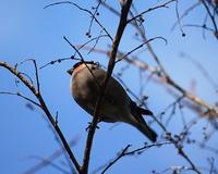 万願寺の森で探鳥会 2017/03/17 - 万願寺通信