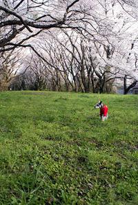 武蔵野散歩 - アインのしっぽ