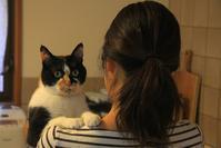 猫たちも家に慣れ - ぶん屋の抽斗